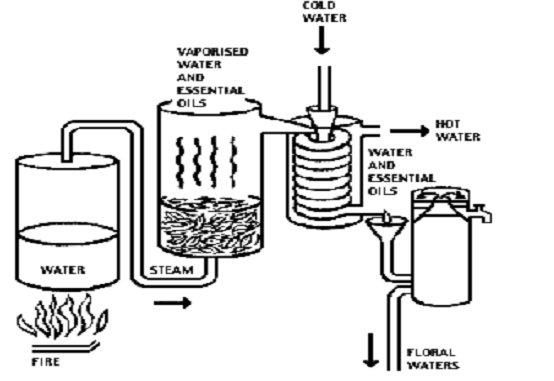 Métodos de produção de perfumes - Destilação a Vapor (2/2)